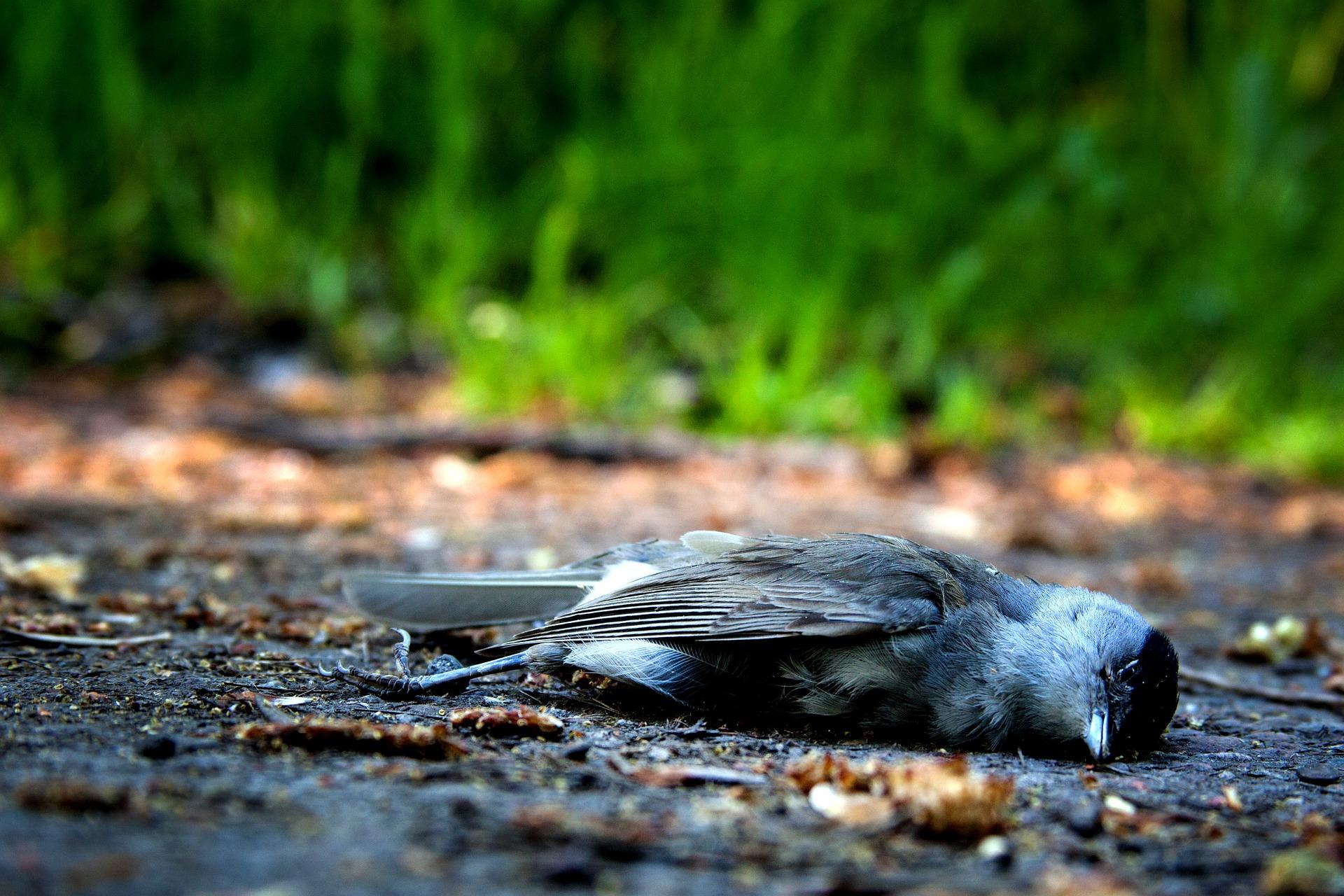 К чему найти мертвую птицу по народным приметам