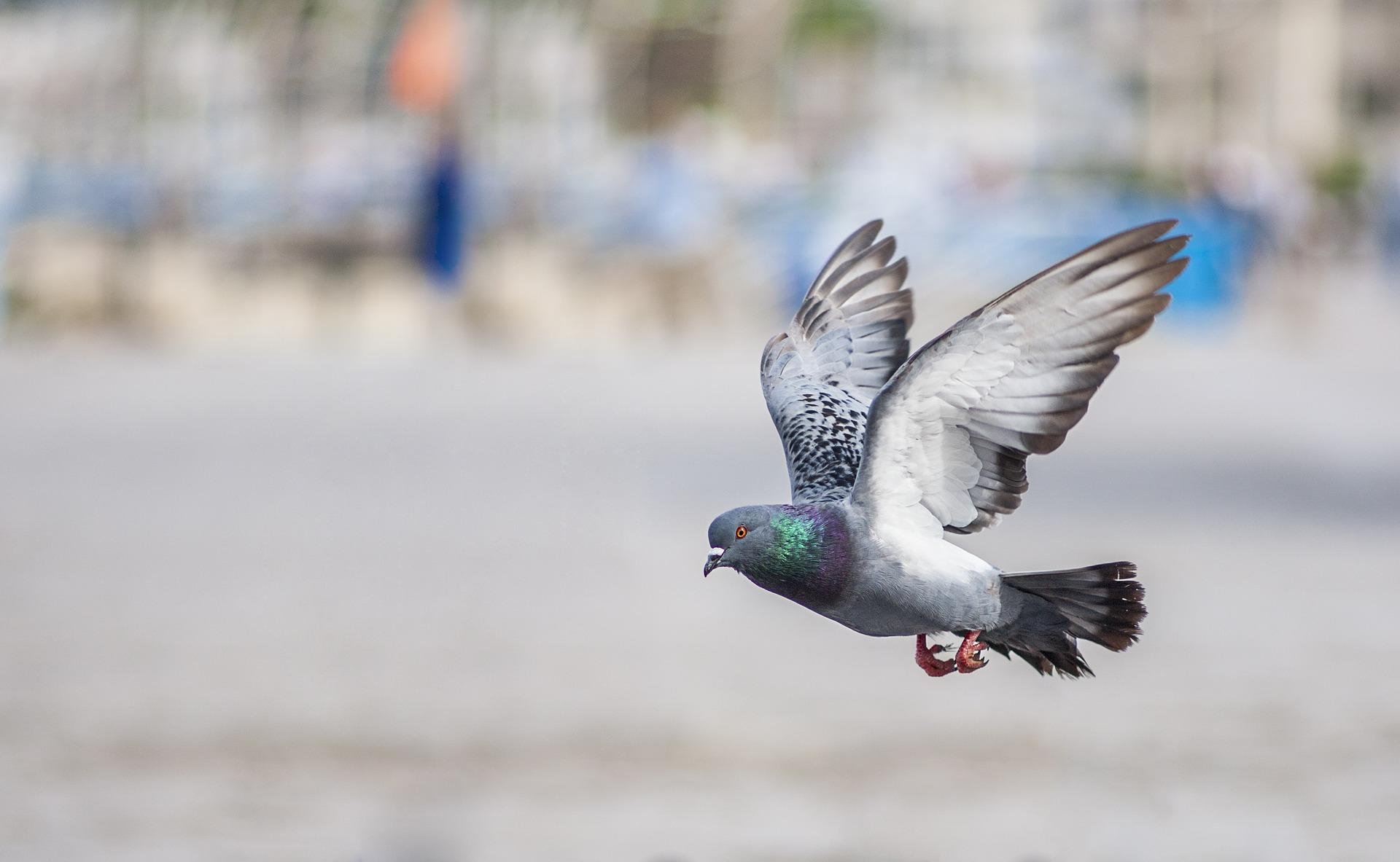 К чему птица накакала на человека по народным приметам