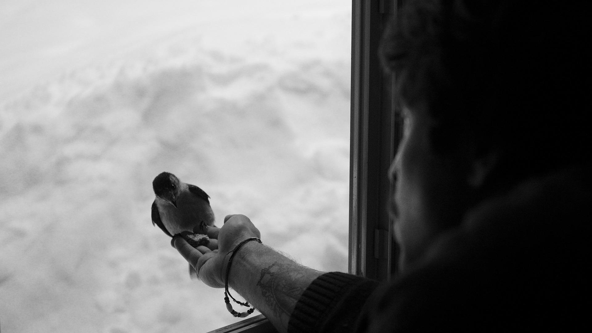 К чему залетела птица в дом по народным приметам