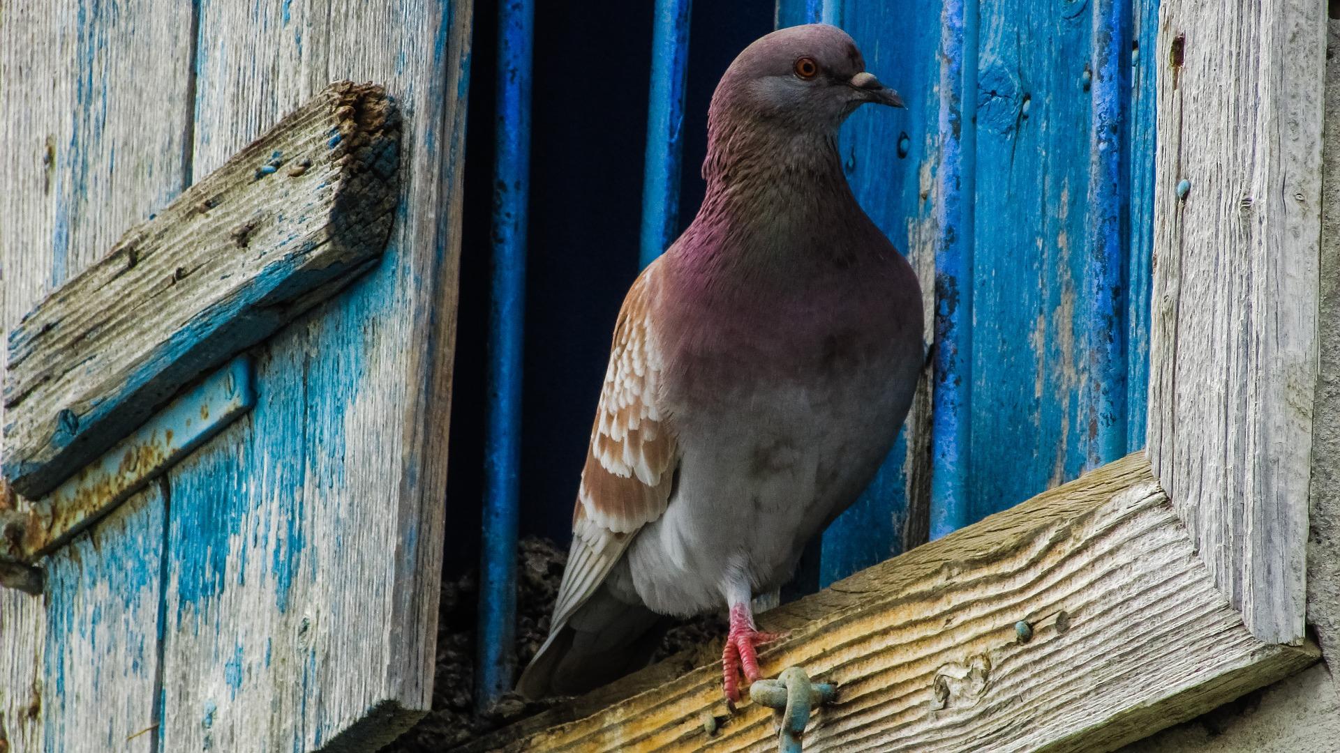 К чему села птица на окно по народным приметам