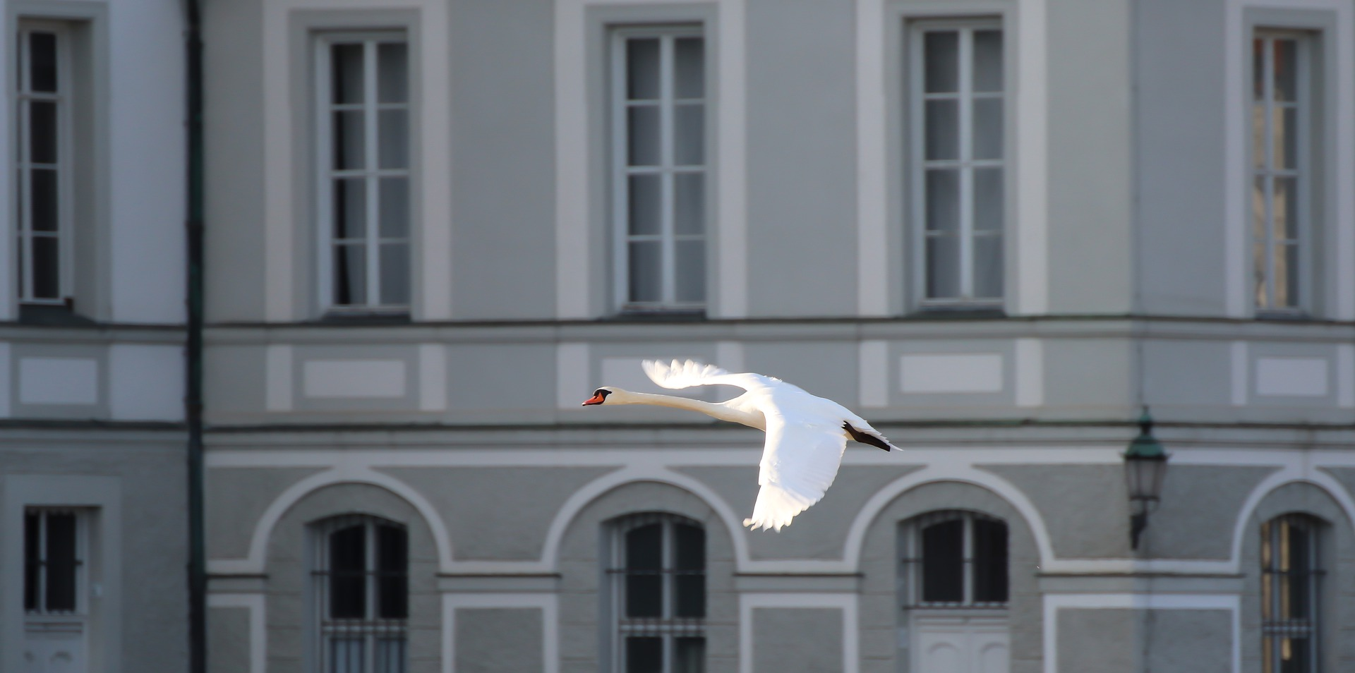 К чему птица ударилась в окно по народным приметам
