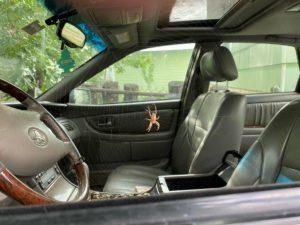 К чему встретить паука в машине