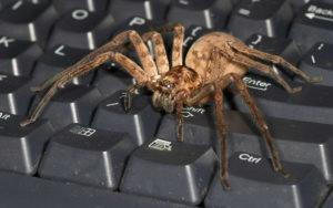 Паук на клавиатуре