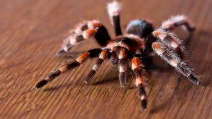 Встреча с пауком в доме или квартире: к добру или неприятностям?