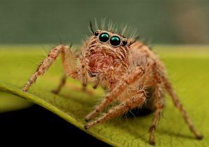 Почему нельзя убивать пауков в доме: примета