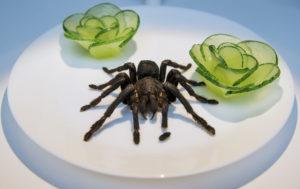 паук в тарелке с едой